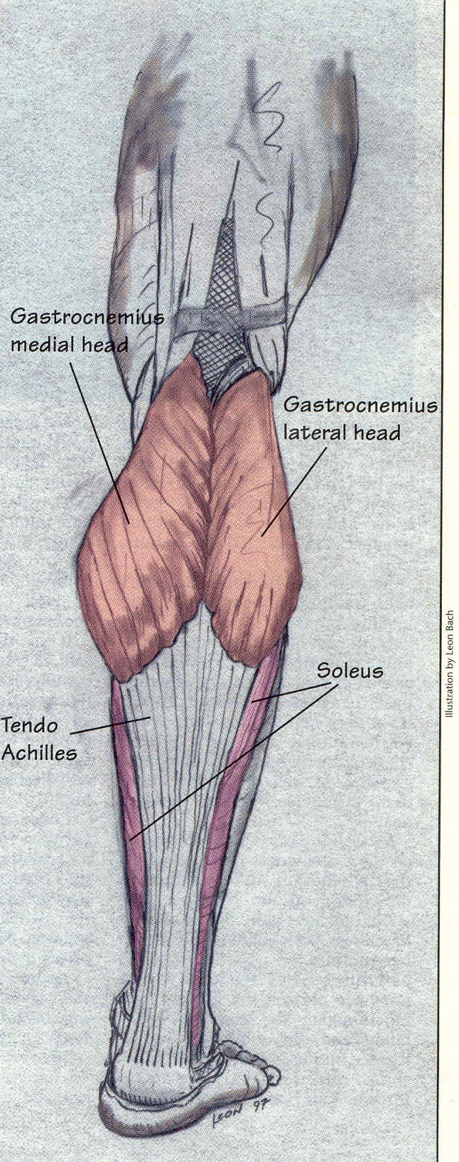 The Mystery Of Lower Leg Calf Development Exposed Fredkochtraining