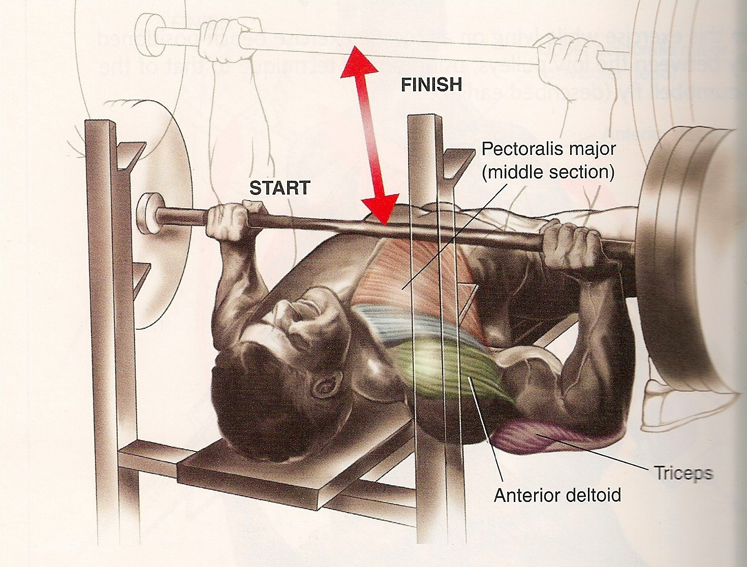 The Bench Press Fredkochtraining