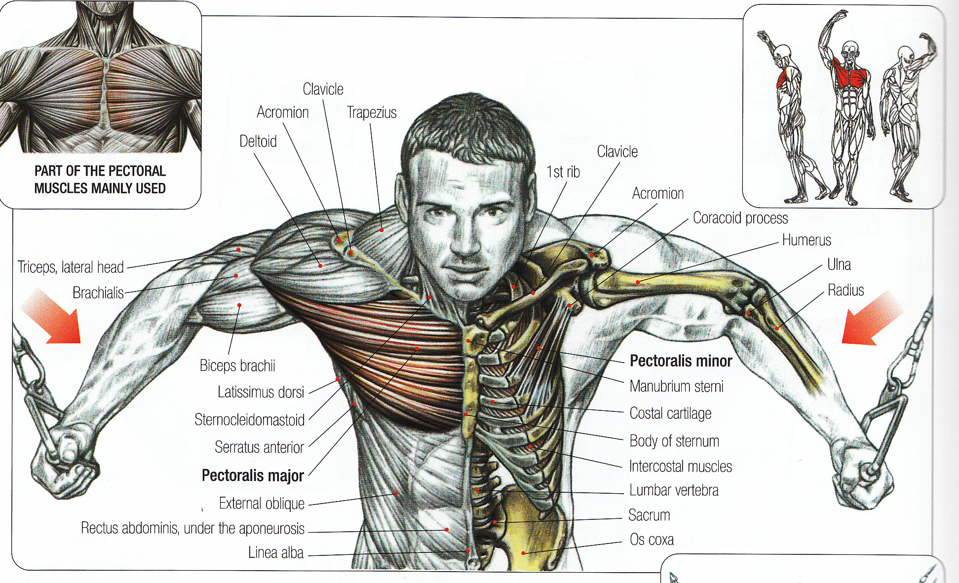 95 Of All Trainers Dont Know Correct Exercise Form Leading To
