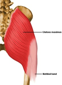 Let's take a deeper look at the Glutes and see if there is anything that may have been missed.